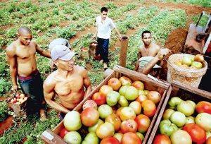 04aem-produccion-alimentaria