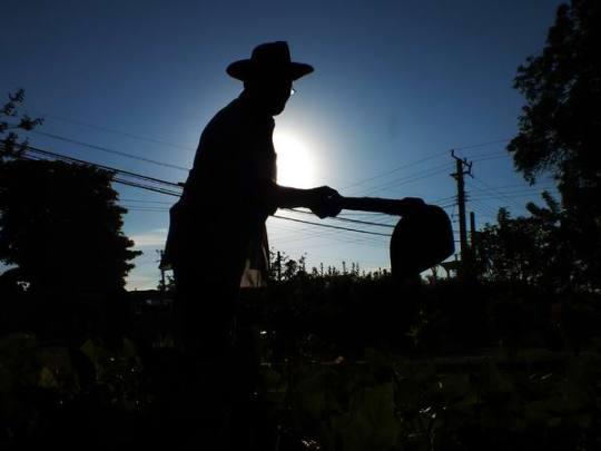 agricultura-campesino-02-cuba-foto-abelrojas