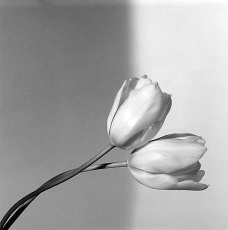 Su fotografía, independientemente del tema, es de una gran exquisitez técnica.
