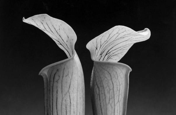 Sus temas habituales incluían las flores, especialmente orquídeas y lirios de agua; retratos de celebridades, entre los cuales se cuentan el artista Andy Warhol, la cantante y actriz Deborah Harry, Richard Gere, Peter Gabriel, Grace Jones y Patti Smith.