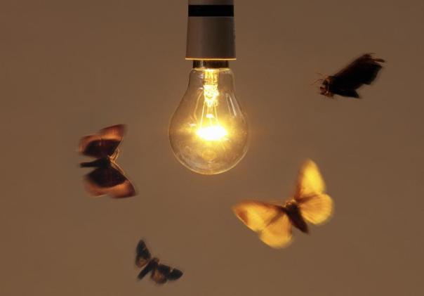 Por-que-la-luz-atrae-a-los-insectos